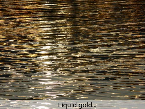 Liquid gold!