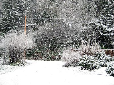 Big snow flakes