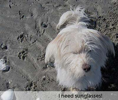 I need sunglasses!