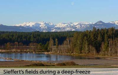 Sieffert's Winter fields